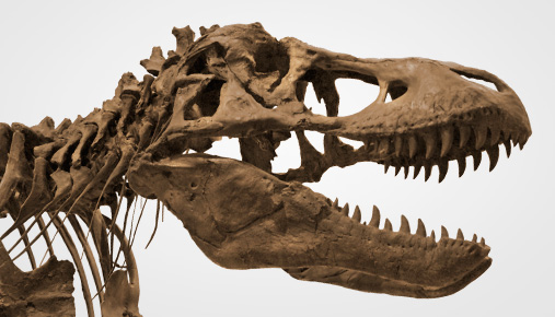 Will Active Mutual Fund Managers Go the Way of the Dinosaurs?