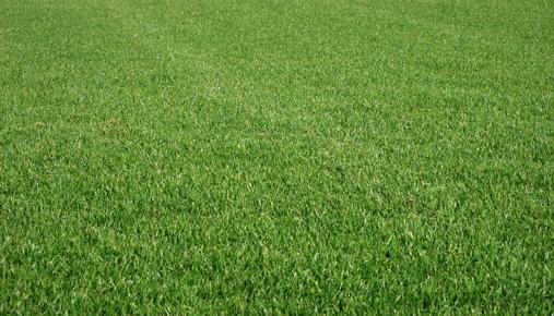 high-end lawn (mower)