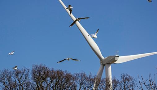 Alternative Energy Investing Birds Windmill