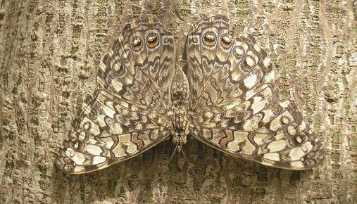 Moth camouflage: Busting tax filing myths, starting with brokerage account 1099 deadlines