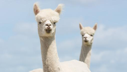 2-Headed Llama: Hedging your Portfolio