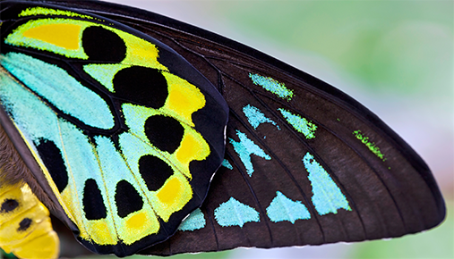 The Butterfly Effect: Using Intermarket Analysis and ETFs