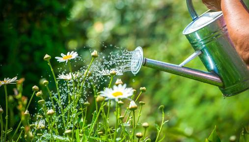 Watering Flowers: Tax Refund Tips