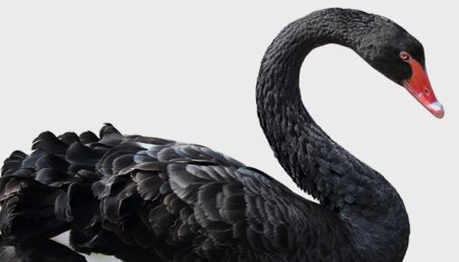 "Black swan: Learn about ""black swan"" financial events and how you can attempt to protect yourself and your portfolio from adverse shocks."