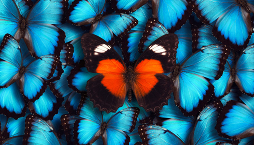 Special butterfly: How traders can qualify for special tax treatment