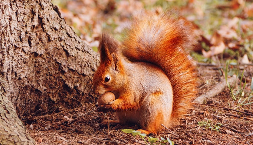 Squirreling It Away: Cash in Investor Portfolios