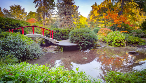 Japanese garden scene: How getting your head in a calm place each morning can benefit your trading