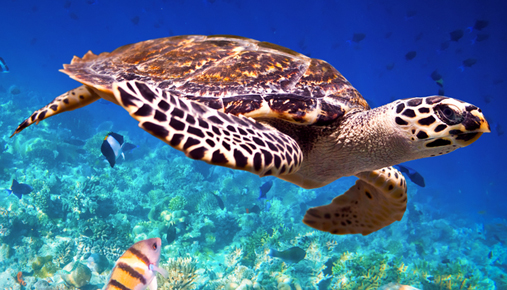 See a sea turtle: Ecotourism offers exotic destinations plus benefits environments and communities