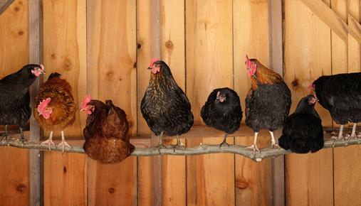 Spring chickens: Job searching as a senior