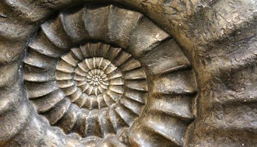 Fibonacci: The Medieval Mathematician and the Stock Market