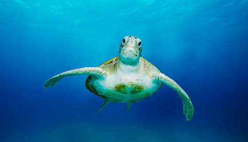 Sea turtle: Rules-based trading helped the turtle traders navigate the markets