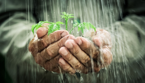 Planting a seed for the future: Estate planning to benefit both you and your heirs