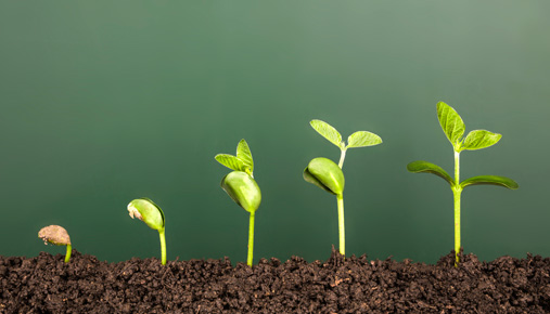 Seedling: Growth funds and tips for investing in them