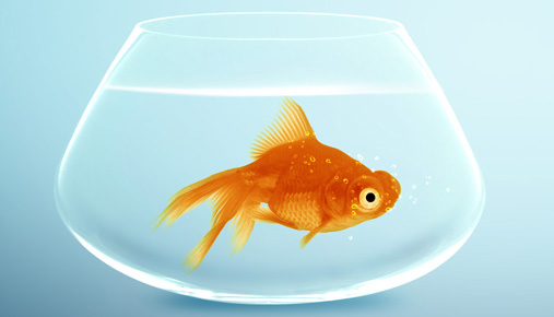 Goldfish in a bowl: Savings in an IRA or 401(k); what to do with extra money from a wage increase
