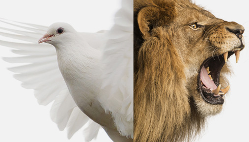 Dove or lion? How to build a retirement portfolio using aggressive and not-so-aggressive mutual funds