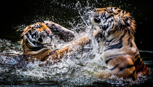 Two tigers: Stock market volatility update as October kicks off earnings season