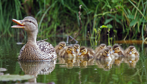 Ducks in a row: Maximize your tax savings with these tips