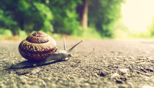 Snail pace: Late tax filers: finish up or get an extension