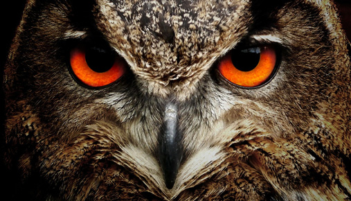 Owl: Nocturnal traders and the overnight session volume patterns