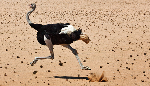Running ostrich: Confirmation bias can mean that positive trading results lead to poor decision-making.