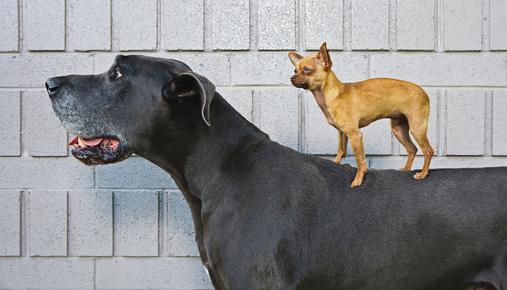 Big dog, little dog: Trading larger position sizes while considering risk management