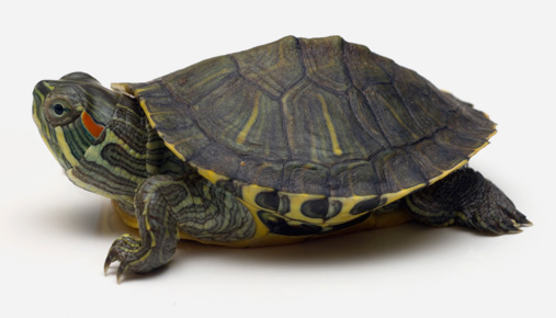 Turtle: Richard Dennis and the legendary turtle traders experiment