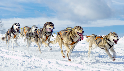 Luxury winter trips: Dog sledding, snowmobiling, and snow hotels