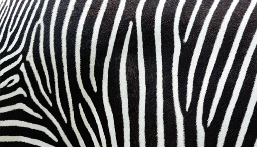 Vertical stripes: Vertical options spreads provide a versatile strategy