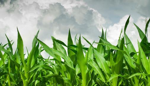 Weather Market: Corn and Energy