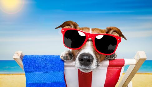 Calendar Spreads: Options Strategy for the Dog Days of Summer Small