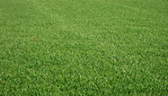 The Grass is Greener: Cut It with a High-End Lawn Mower