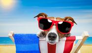 Calendar Spreads: Options Strategy for the Dog Days of Summer