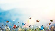 Turn a Long Butterfly Spread into a Credit Spread? Break a Wing