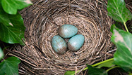Keep That Nest Egg Growing in Retirement: You'll Need It